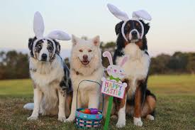 Keep the Family and Dogs Happy When Travelling these Easter ...